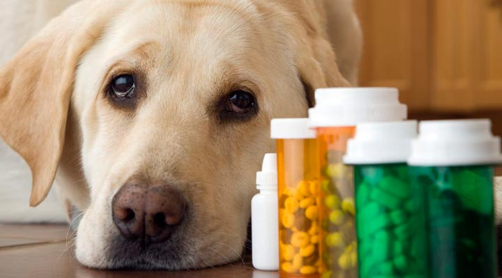 Dog Supplements Final - Best Dog Supplements on the Market: Their Ingredients and Description