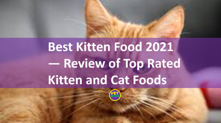 Best kitten food 2021
