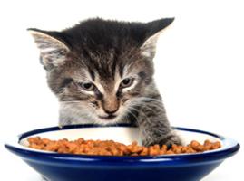Organic-kitten-food