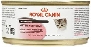 Royal Canin Feline Health Nutrition Final - Best Kitten Food 2019 — Review of Top Rated Kitten and Cat Foods