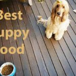best-puppy-food-to-buy-2019