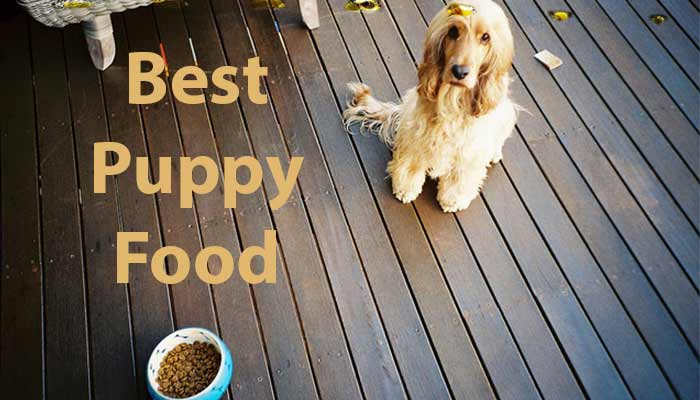 best puppy food to buy 2019 final - Best Puppy Food 2019 - Review of Best Large Breed Puppy Food Brands