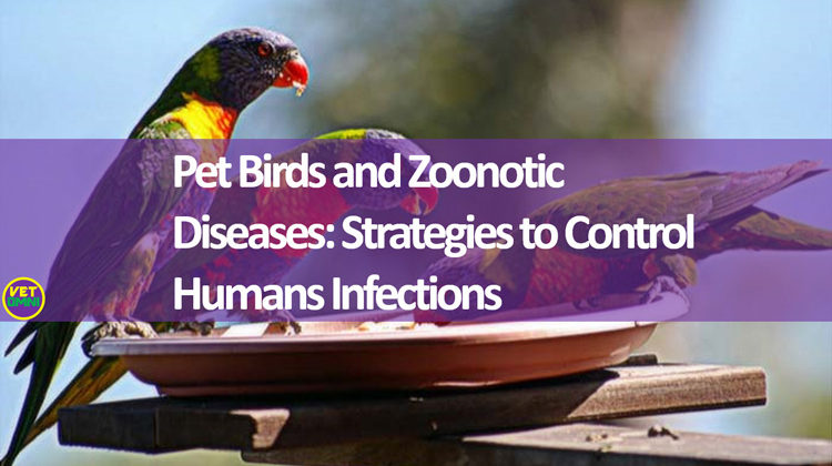 Pet birds and zoonotic diseases