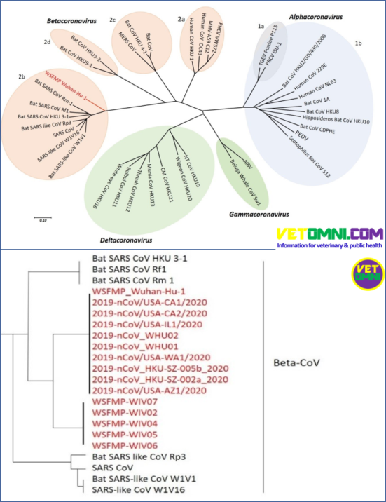 Phylogenetic tree 1 2 1 - What is COVID-19? How can we win against it?