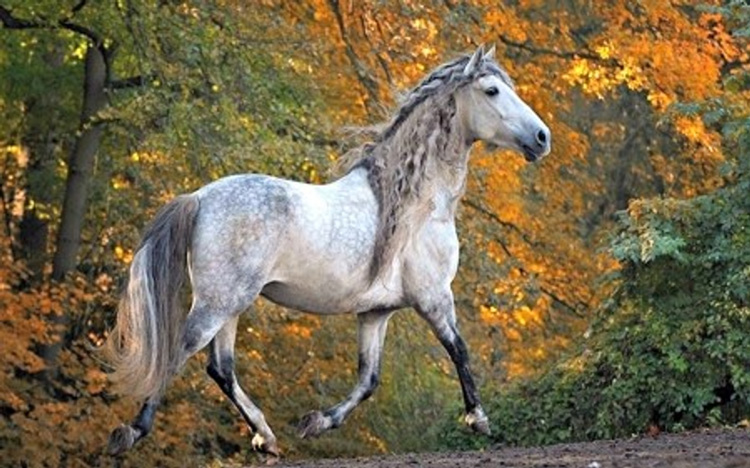 First image adjusted 1 - Interesting facts about horses that you may want to know