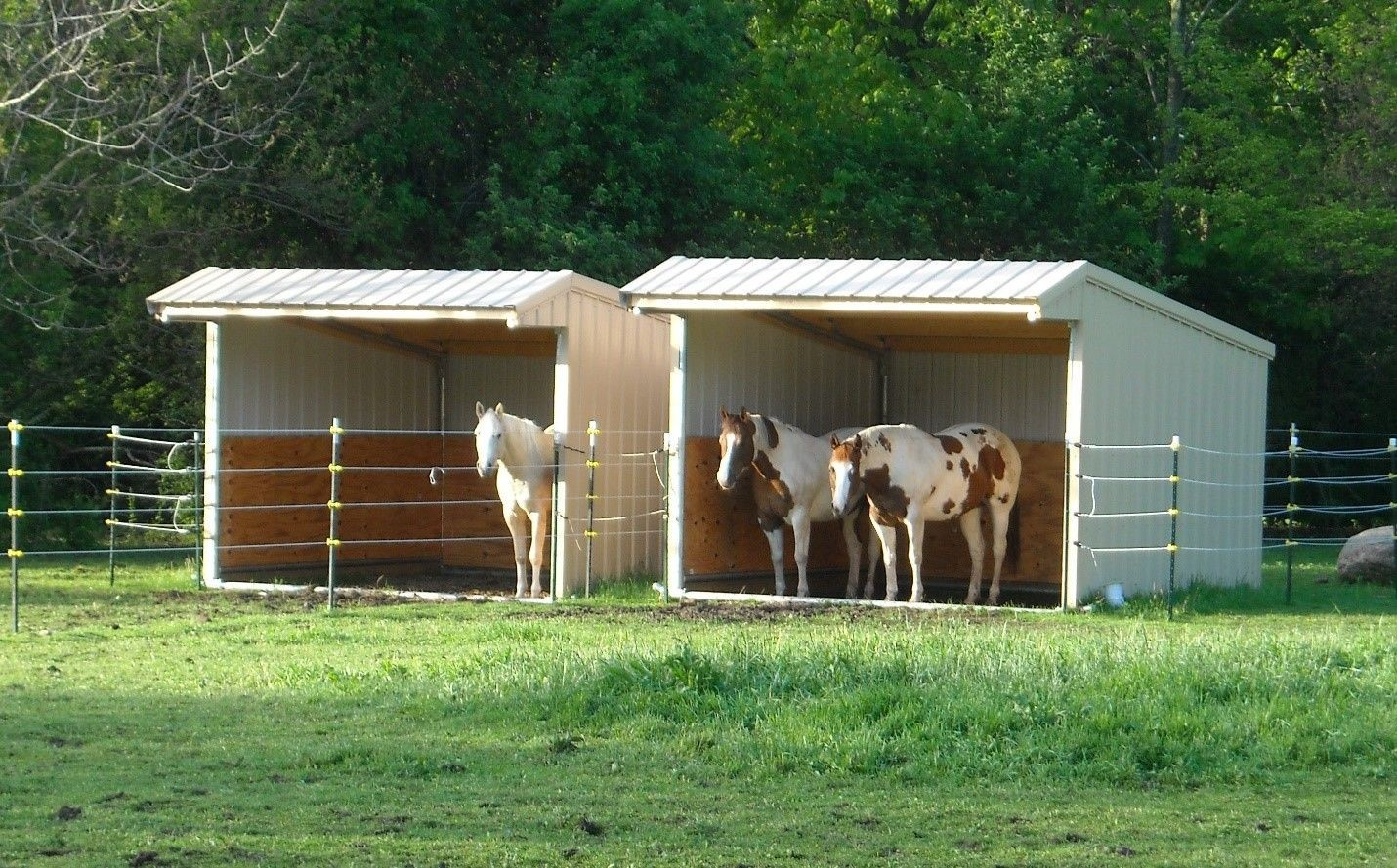 Housing 2 - Interesting facts about horses that you may want to know