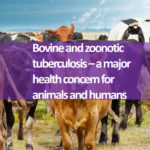 Bovine and zoonotic tuberculosis