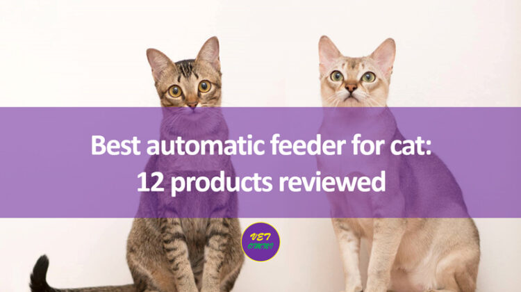 Best automatic feeder for cat