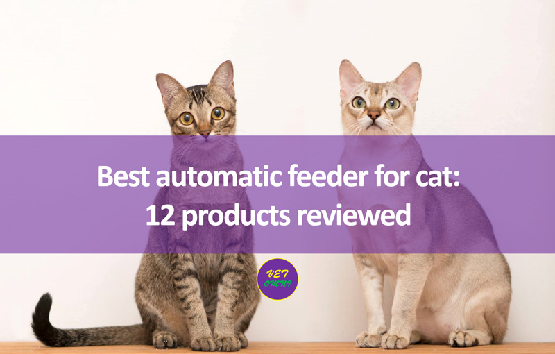 Feature image edited - Best automatic feeder for cat: 12 products reviewed