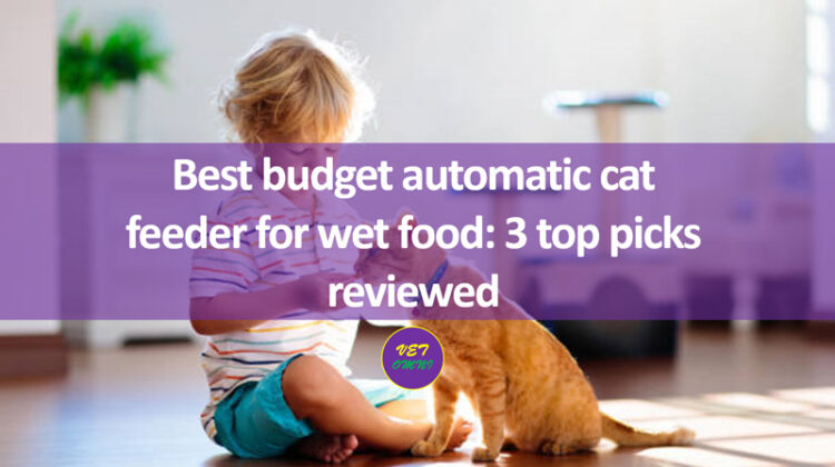 Best budget automatic cat feeder for wet food