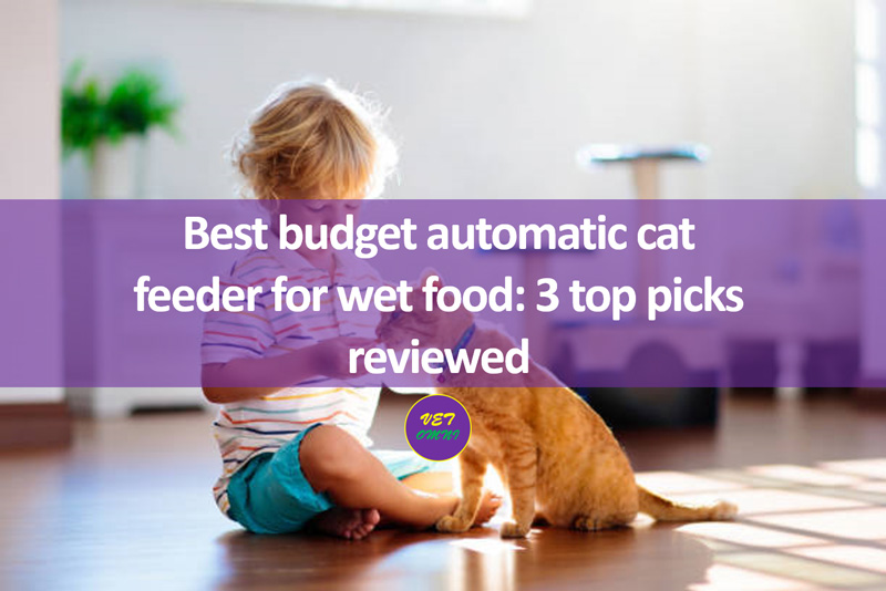 Feature image edited - Best budget automatic cat feeder for wet food: 3 top picks reviewed